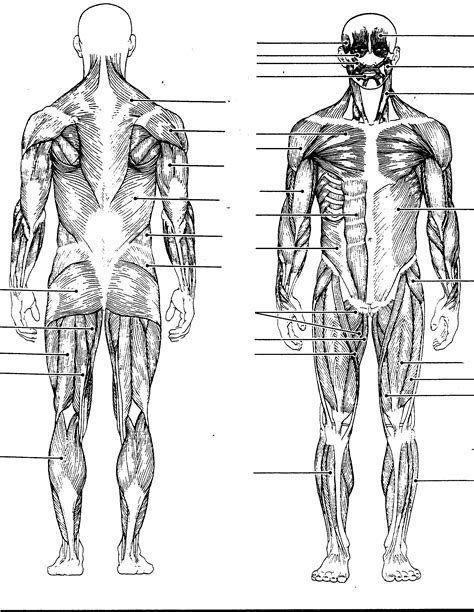 free coloring pages of human anatomy labeling