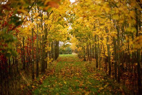 top  places   fall foliage cincinnati magazine