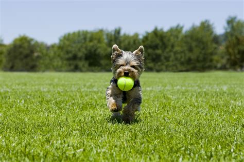 artificial grass for dogs grass for dogs artificial grass news tag
