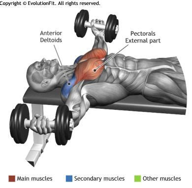 flat bench dumbell flye chest muscles gym and muscle on pinterest