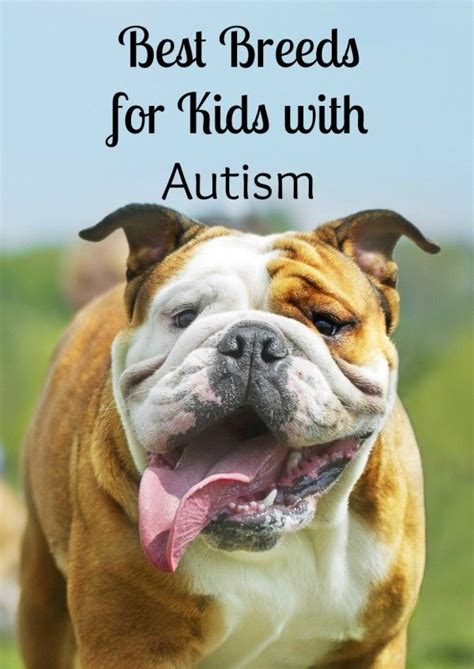 best dogs to as service dogs best 25 autism service dogs ideas on service dogs autism services and