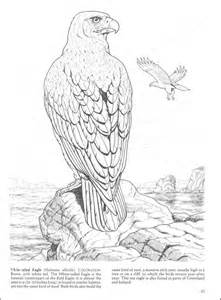 free birds of prey coloring pages