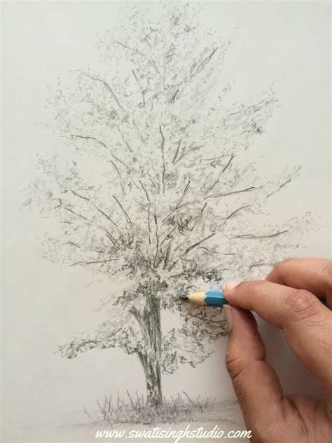 aspen tree drawings best 25 tree drawings pencil ideas on how to