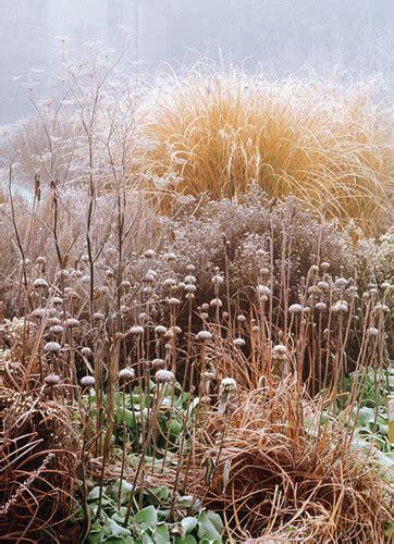 winter gardening cheer in the winter garden