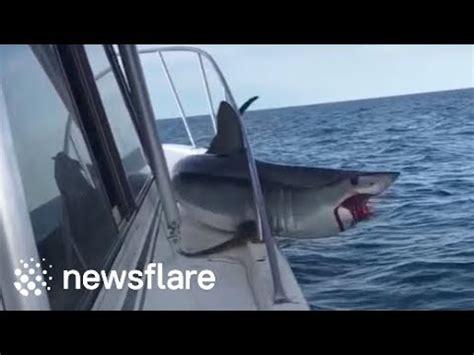 mako shark boats huge mako shark jumps onto fishing boat youtube