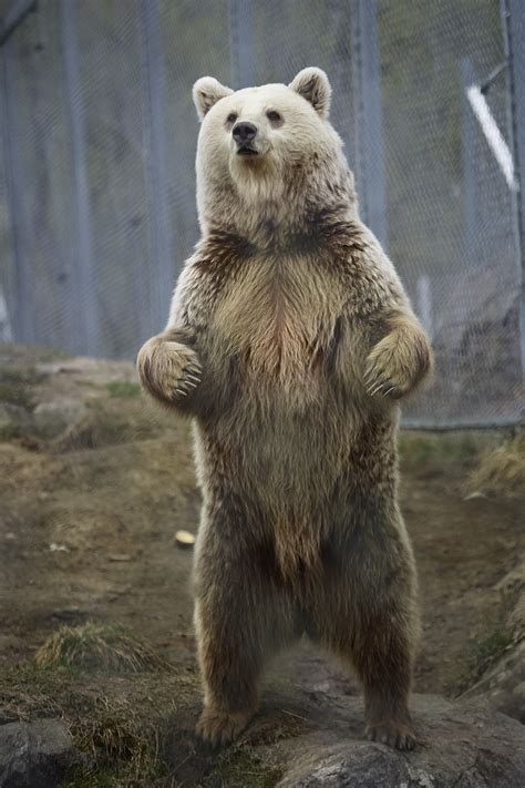 bear s alps wildlife wildlife tours swiss animals
