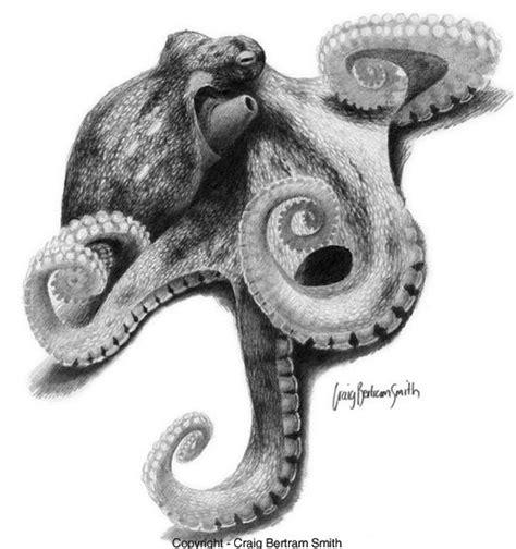 B W Sketches by B W Realistic Octopus Sketch Spirit Beast