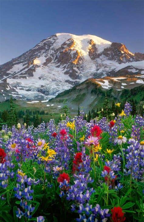 Flower Mountain rila mountain flower bulgaria places to visit in
