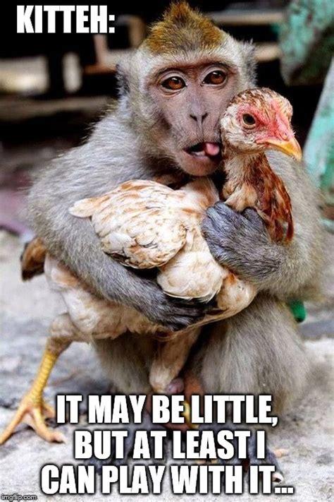 Monkey Meme Generator - monkey meme generator 28 images monkey meme generator