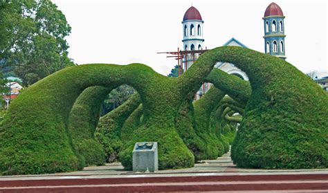 topiary arts monumental topiary in costa rica the along