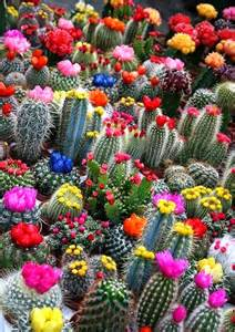 plants blooming plant life cacti and succulents