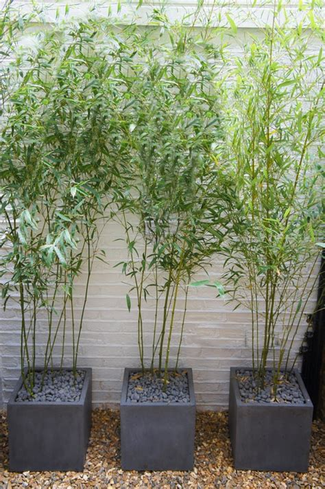 Planters For Bamboo by Bamboo Planter Box Quotes