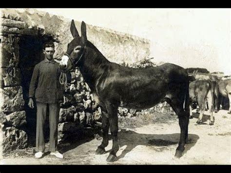 fotos antiguas para restaurar 365 fotos antiguas de menorca para la historia youtube