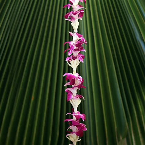 hawaiian leis orchid tuberose combination lei
