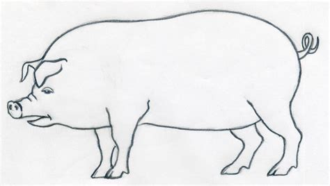 how to a pig how to draw a pig