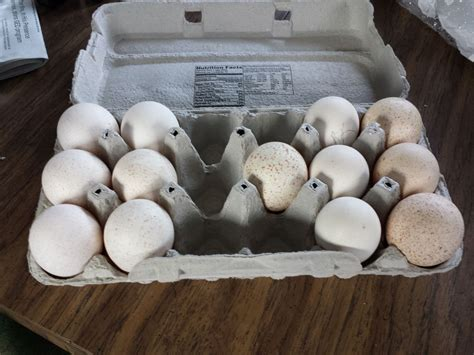 how to hatch wild turkey eggs with pictures ehow hatching shipped turkey eggs any advice page 2