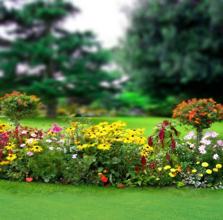 Background Wedding Outdoor by Aliexpress Buy Flower Green Tree Scenic