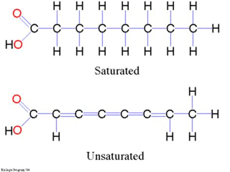 saturated diagram chapter 17 lipids sociology 101 with at