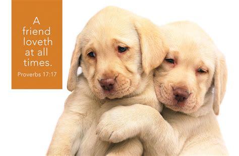puppies hugging hugging puppies postcard postcard 25 pak christian supply