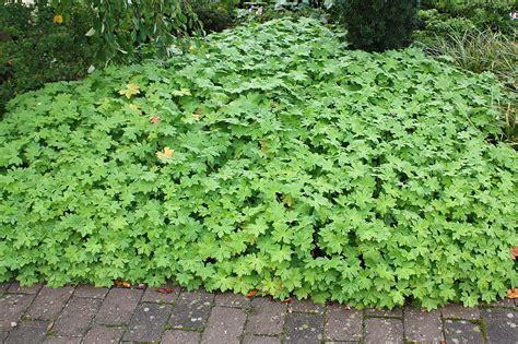 Str Ucher F R K Bel 2584 by Kletterpflanzen Winterhart Immergr 252 N Kletterpflanzen