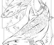 Coloriage Requin M 233 Chant Dessin Gratuit 224 Imprimer