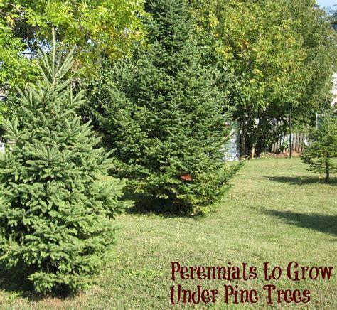 Kwc Ava Kitchen Faucet Perennials To Grow Pine Trees 28 Images Hosta Pine