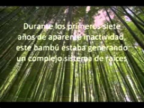 imagenes bambu japones bambu japones youtube