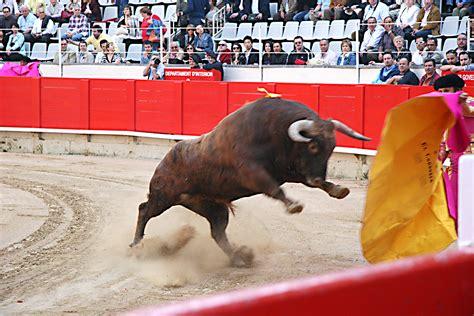 imagenes artisticas de toros barcelona proh 237 be grabar escenas con toros en la nueva