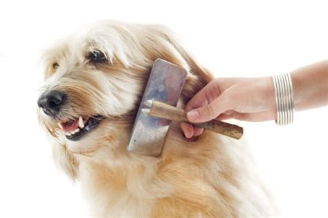 sedative for dogs how to sedate a at home for grooming