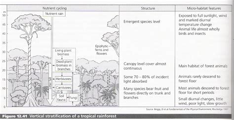 rainforest sections patterns in environmental quality and sustainability