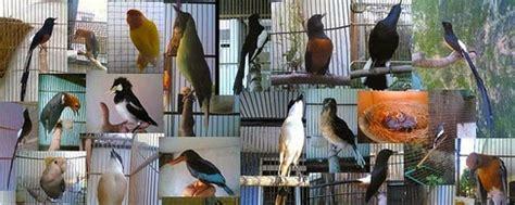 Lu Spektrum Untuk Burung cara sederhana merawat berbagai jenis burung biar rajin