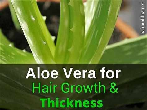 Masker Aloe Vera 25 best ideas about aloe vera hair growth on