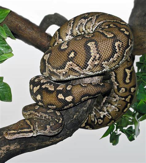 python image python anchietae