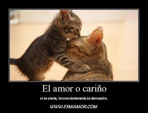 imagenes buenos dias con gatitos gatitos lindos con frases bonitas de amor para descargar
