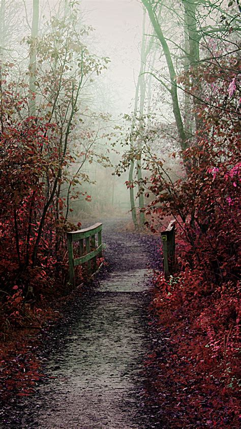 wallpaper android path misty autumn path android wallpaper free download