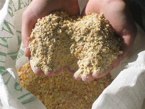 Teknik Membuat Biskuit Pakan Ternak daftar harga pakan ayam hobi ternak