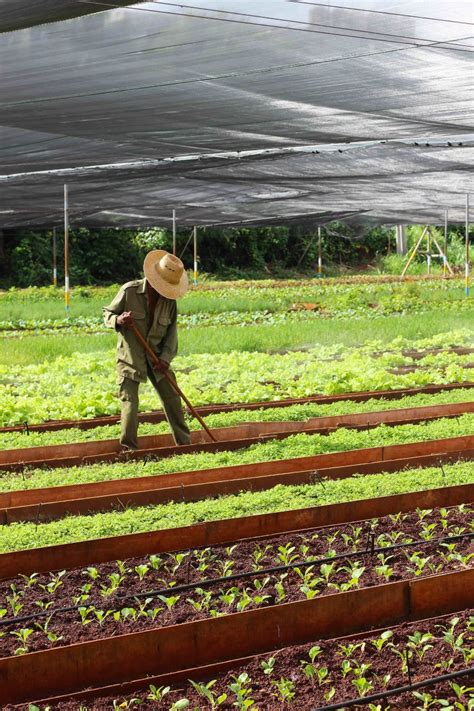 caes students cuba food security  sustainability