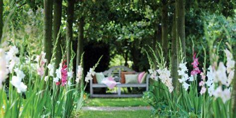 fiori australiani funzionano fai da te in giardino il tuo giardinaggio spiegato passo