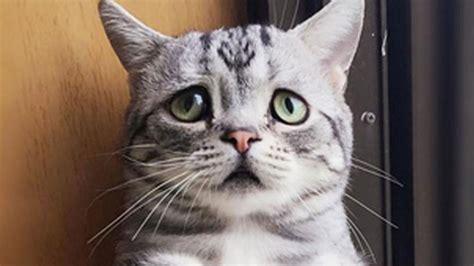Imagenes Gatos Tristes | las mejores fotos de gatos tristes de diferentes razas