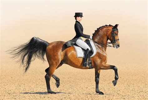 The message of the dressage   Pets4Homes