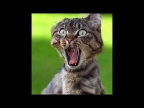 imagenes graciosasde animales caras graciosas de animales x camilu youtube
