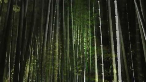 japanese style garden lights japanese gardens of nara the ancient capital video