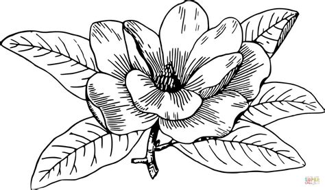 printable magnolia flowers magnolia coloring page free printable coloring pages