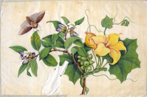 0007275528 botanical painting with coloured pencils publishingnix blog