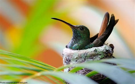 interesting facts about hummingbirds just fun facts