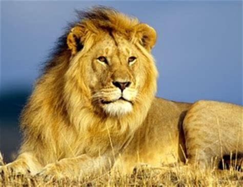 Imagenes De Animales Vertebrados Mamiferos | los mam 237 feros animales vertebrados