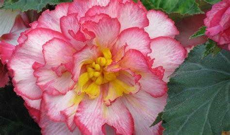 imagenes de flores extrañas cuidado de margaritas stunning y cuidados de las