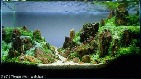 aquascaping contest aquascape www imgkid com the image kid has it