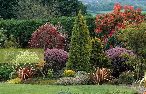gap gardens mixed planting of evergreen conifers and