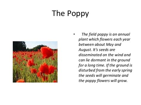 what is the story of day story of the memorial day poppy